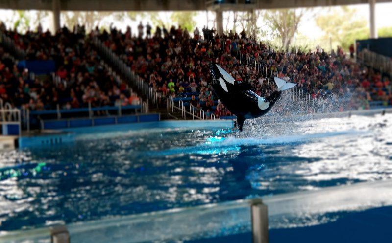 One Ocean Show at Sea World Spooktacular San Antonio - QueMeansWhat.com